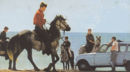 horse (France, 1965)