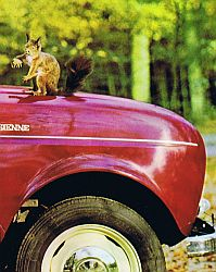 chipmunk (Netherlands, 1966)