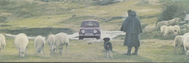 sheep, dog (Spain, 1968)
